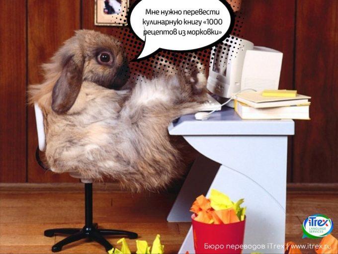 Кролик заказывает перевод