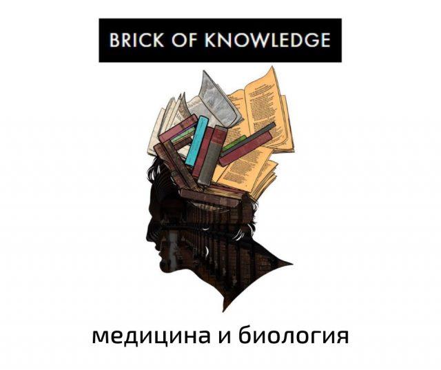 """логотип проекта """"Brick of knowledge"""""""